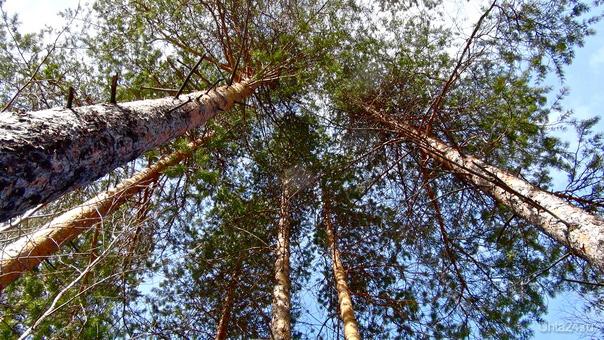 Какое небо голубое! Природа Ухты и Коми Ухта