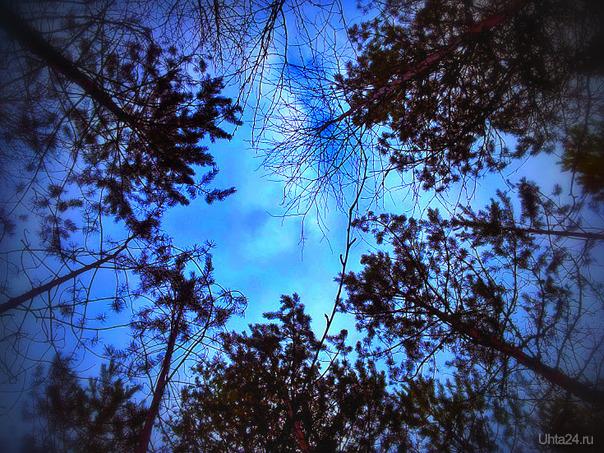 """Пью кофе и рассматриваю небо. И небо смотрит на меня украдкой. У нас друг в друге - надобность, потреба. Мы завели такие с ним порядки.  Оно сегодня нежное такое, Той самой """"бледно-голубой эмали"""". И гладить хочется его рукою, Но так, чтобы другие не видали.  Смотрю и не могу я насмотреться. И насмотрюсь я досыта? Едва - ли... От суеты земной нет лучше средства -  Читать с утра небесные скрижали.  Вита Савицкая Природа Ухты и Коми Ухта"""