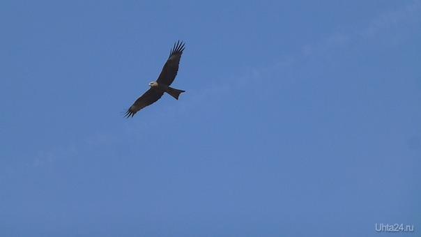 Почему мы не птицы, почему не летаем...  Ухта