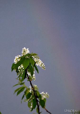 После дождя. Природа Ухты и Коми Ухта