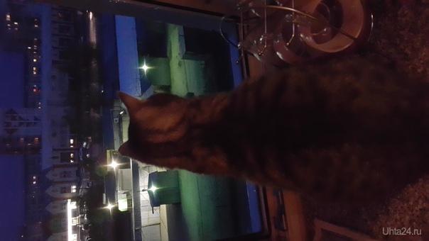 Кот и ночь... Питомцы Ухта