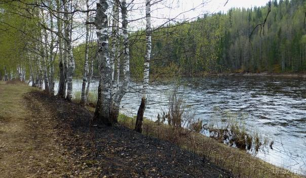У реки. Природа Ухты и Коми Ухта