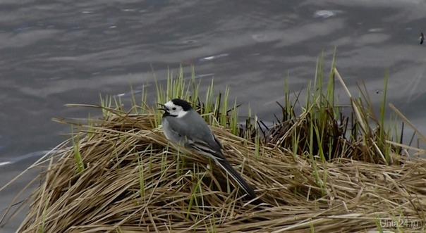Кто слушает весенние трели птиц,тот меня поймет.  Ухта