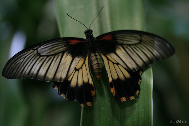Выставка бабочек в ДК...  Ухта