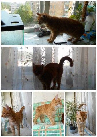 Солнечный котик по кличке Филя) Каждое лето у нас в гостях. Сейчас гостит с 30.05 по 28.06  Ухта