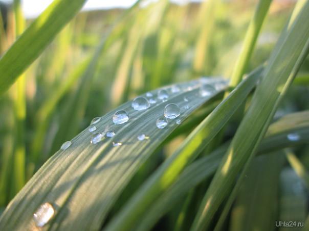 Роса на траве  Ухта