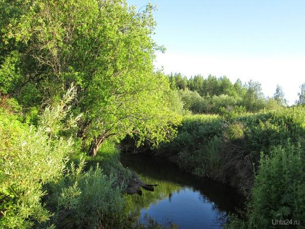 Устье ручья Нефтьель Природа Ухты и Коми Ухта