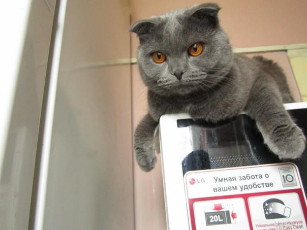Истинному коту печка нужна...настоящая. А у вас... Питомцы Ухта