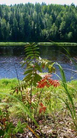 Сменяет Осень Лето, как всегда, Чарует нас любое время года. Даруя нам тепло и холода, Меняет декорации природа.(Стихи взяты из Интернета). Ну как-то так.По-моему лучше и не скажешь. Природа Ухты и Коми Ухта