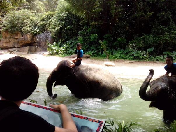 развлечение для слонов и людей - обливание водой из хобота)) внезапно))  Ухта