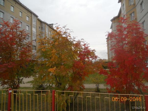Рябина красная Улицы города Ухта