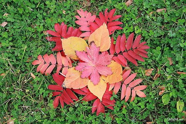 Осенний ковер Природа Ухты и Коми Ухта