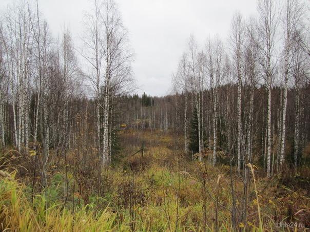 в лесу Природа Ухты и Коми Ухта