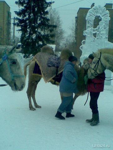 Новый Год, на улице далеко за - 35..... Питомцы Ухта