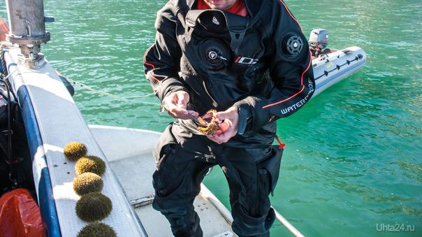 Завтрак туриста :)...с икрой морского ежа...это вам не бутер с обрыгшей красной :)  Ухта