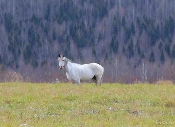 Лошадь на осеннем лугу Питомцы Ухта