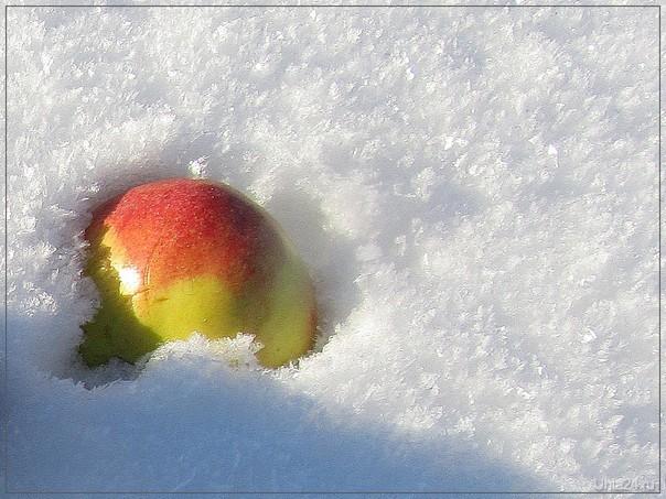 Яблоко на снегу  Ухта