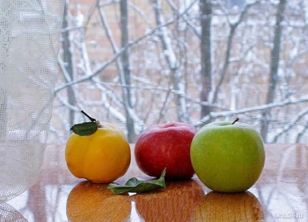 Айва и два яблока  Ухта