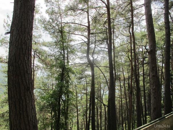 Природа Абхазии, район г. Гагра  Ухта