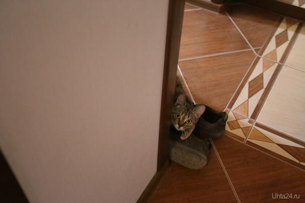 Фортуна, кошка моего младшего сына. Питомцы Ухта