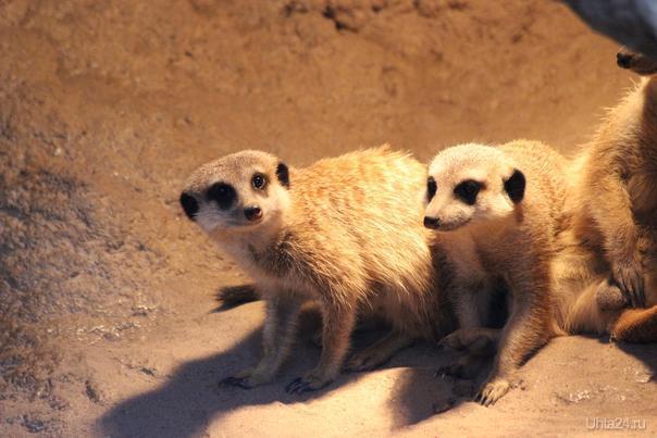 Зоопарк Барселоны Мир глазами ухтинцев Ухта