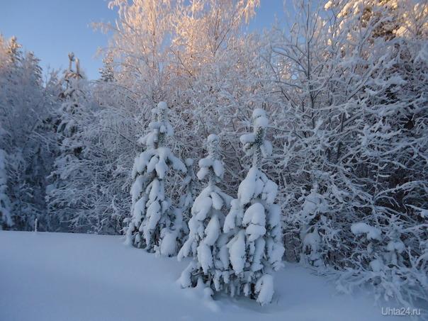 Снежные подружки Природа Ухты и Коми Ухта