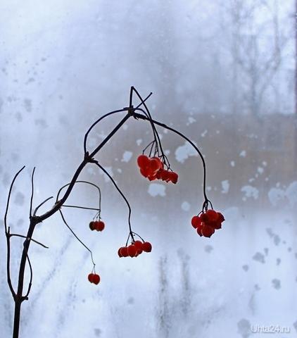 Снегопад за окном Разное Ухта