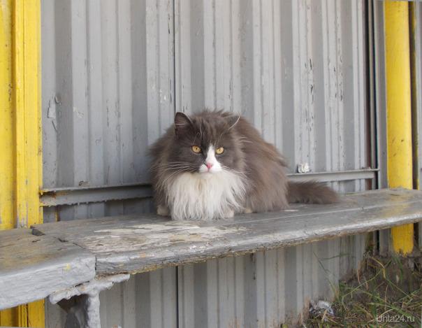 Кошка пришла на остановку с другой стороны дороги.Ждала кого-то.  Ухта