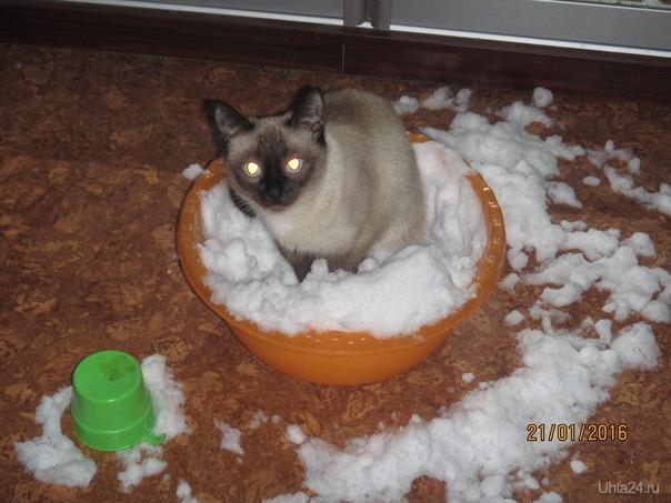 Если на улицу на снег..то снег придет домой) Питомцы Ухта