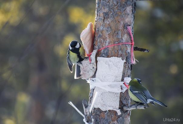 Птички) Природа Ухты и Коми Ухта
