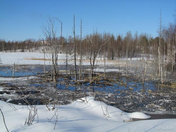 уже болота оттаивают,значит клюква в июне уже будет Природа Ухты и Коми Ухта