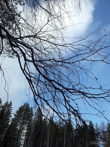 Нырнуть в небо Природа Ухты и Коми Ухта