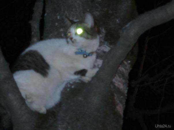 кошка на дереве   Ухта