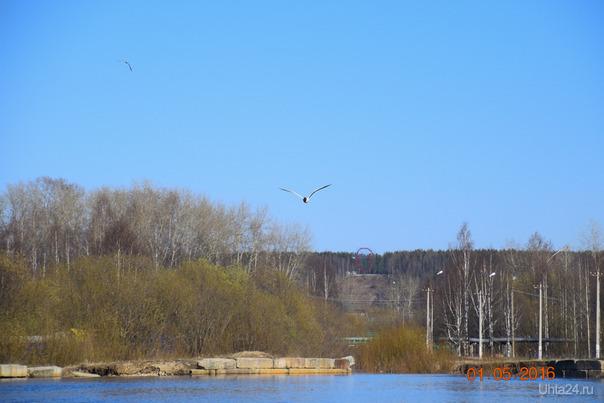 Чайка во взрослом парке Природа Ухты и Коми Ухта
