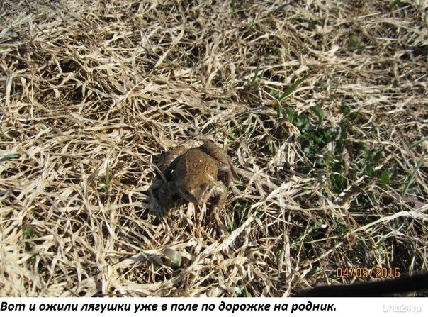 Лягушка. Природа Ухты и Коми Ухта