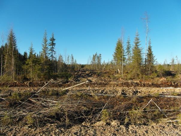 Современные технологии лесозаготовки_2 Природа Ухты и Коми Ухта