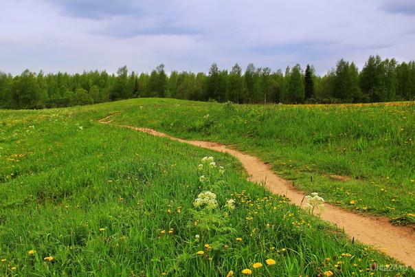 Бежит тропинка через луг, Ныряет влево, вправо. Куда ни глянь, цветы вокруг Да по колено травы.  Ухта
