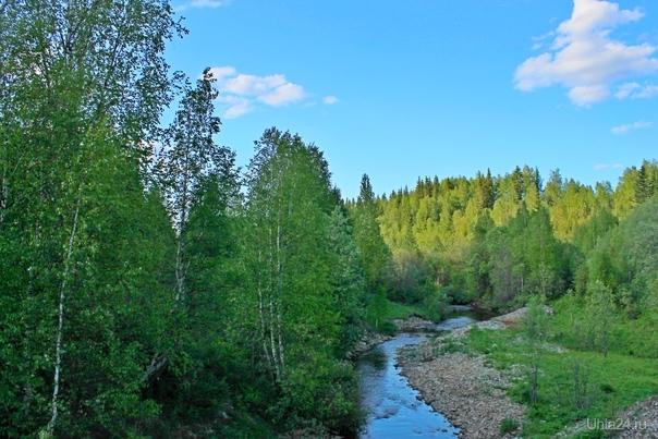 Река Луньвож в июне Природа Ухты и Коми Ухта