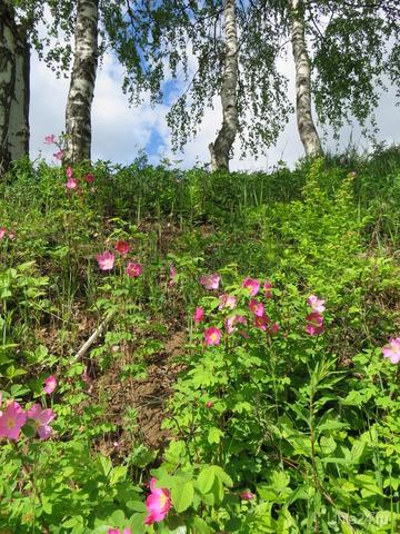 Лето,ах,лето... Природа Ухты и Коми Ухта