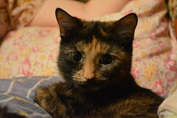 кот.кошка  Ухта