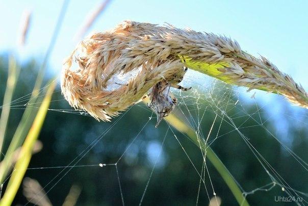 Логово паука Природа Ухты и Коми Ухта