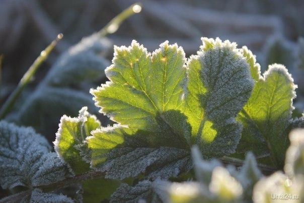Утренний заморозок Природа Ухты и Коми Ухта