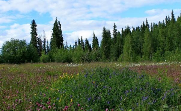 Цветочная полянка. Снято за нефтешахтой №3 (Н. Доманик)  Ухта