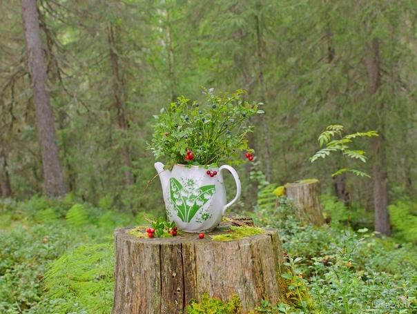 Лесной букетик  Ухта