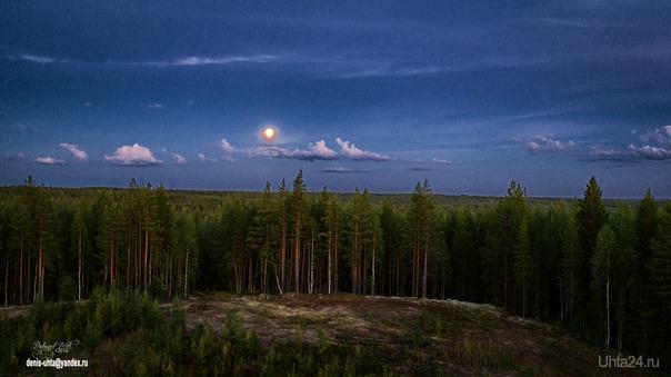 Вечерний лес.  Ухта