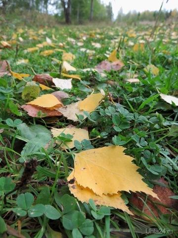 По ковру из желтых листьев... Природа Ухты и Коми Ухта