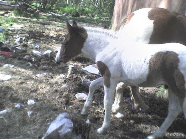 Лошади Питомцы Ухта