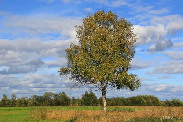Во поле береза стояла  Ухта