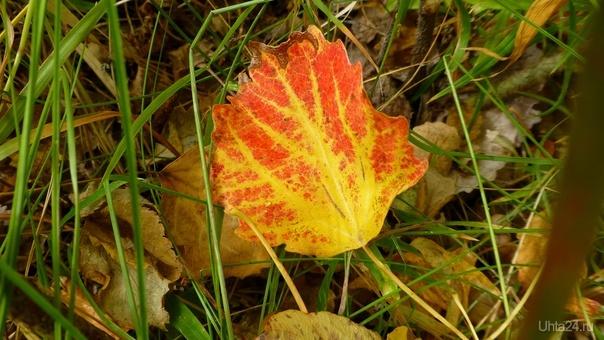 Опавший лист осенний... Природа Ухты и Коми Ухта