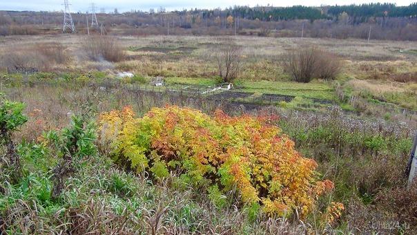 Последние яркие краски осени. Природа Ухты и Коми Ухта